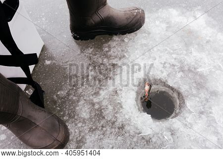 Fish Being Pulled Through The Ice While Ice Fishing. Pulling Caught Fish From A Hole In The Winter F