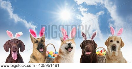 Colorful Easter Eggs And Cute Dogs With Bunny Ears Headbands Outdoors, Collage