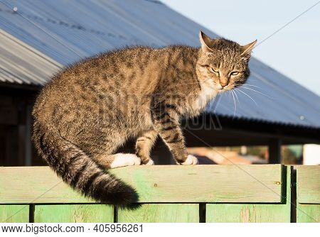 Grumpy Tabby Cat On The Wooden Fence
