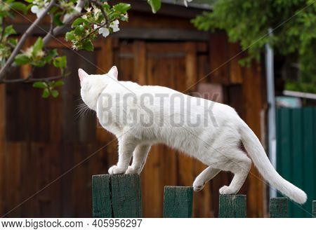 Young White Cat Turned Away On Wooden Fence