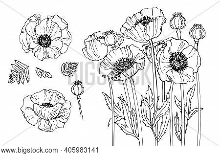 Poppy Flower In Memory Of The Victims Of The First World War. Flowers For The Memorial. Remembrance