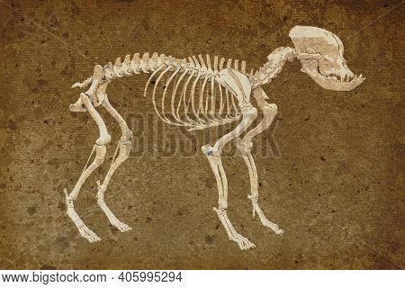 Canine skeleton in retro style, French bulldog dog with brachycephalic features, 3d illustration