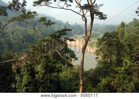 Taman Negara - Forest View