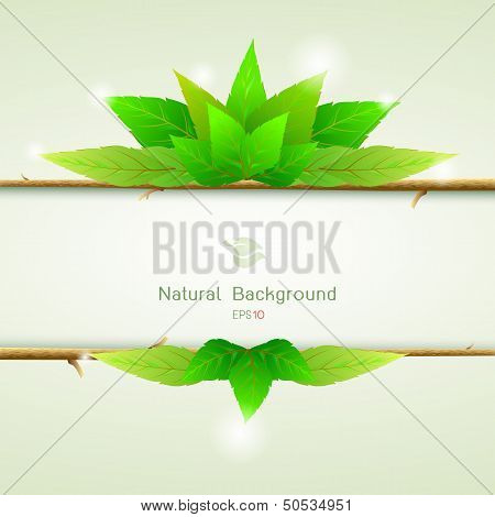 Green Leaves Ecology Background