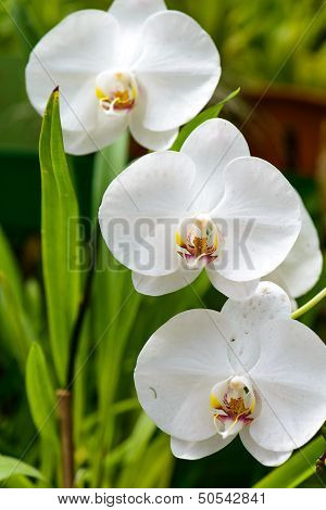 Sri Lanka. Royal Botanic Gardens. Different Types Of Orchids