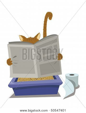 Cat And Litterbox