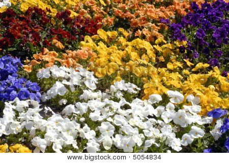 Close-up Flower Bed Background