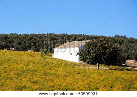 Asparagus field and white building, Spain.