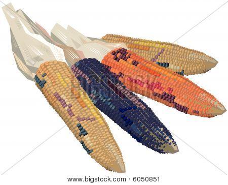 Ears of Indian corn