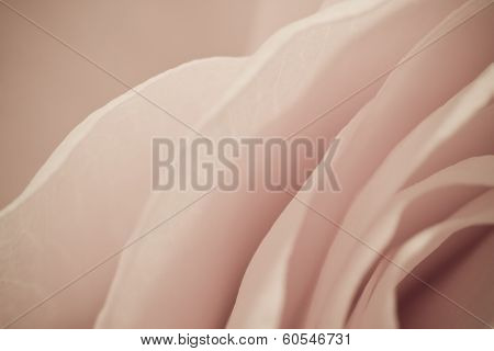 close up of rose petals