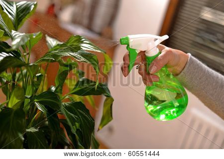Young Woman Watering Houseplants