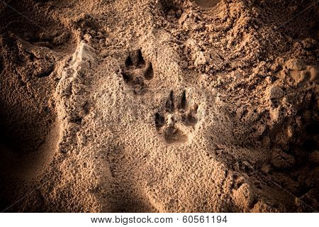 Dog's Foot Prints In The Sand