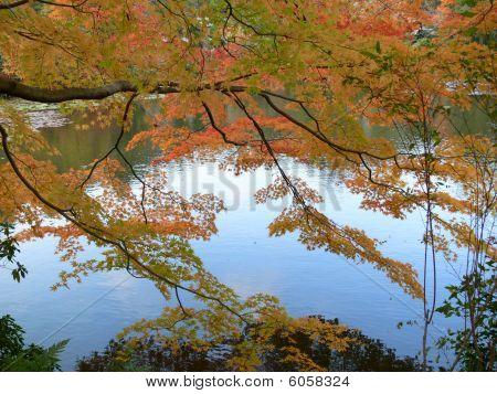 Autumn Leaves Pond