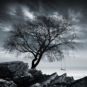 Tree without leaves with swing stands on a rocky seashore poster