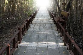 Passages In Forest Of Phetchaburi, Thailand