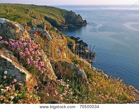 Idyllic Coastline Of Mullion Cove, With Wildflowers, South West England
