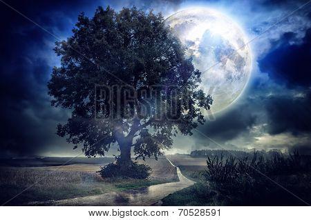 Full moon over corn field on a summer night poster