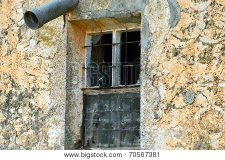 dog and window