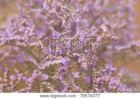Tumbleweed Grass Field Violet Flowers