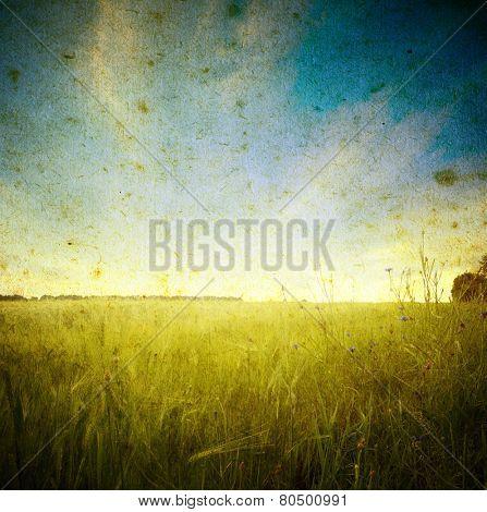 Field of wheat; vintage photo
