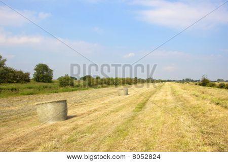 Midsummer Hayfield