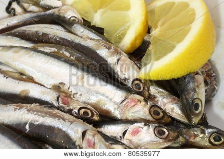 Dish With Raw Sardines Just Fished And Lemon