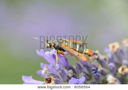 seltene Schmetterling
