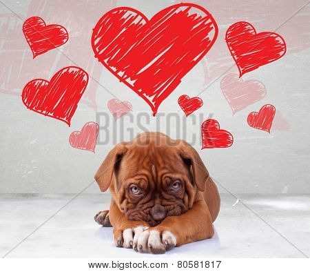 shy love of a dog de bordeaux puppy wit adorable face on hearts background