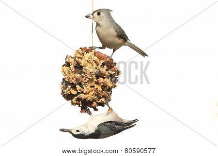 Birds On A Suet Feeder On White