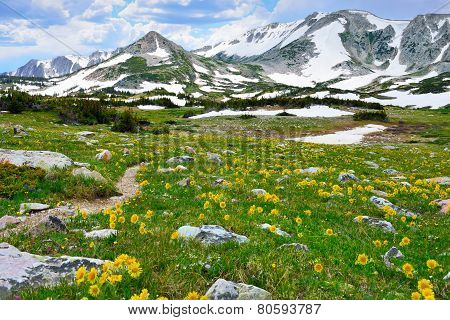 Trail Through The Alpine Meadow With Wild Flowers In Snowy Range Mountains Of  Medicine Bow, Wyoming