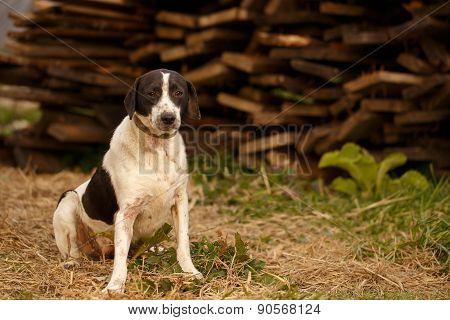 Black and White Dog  on Manger