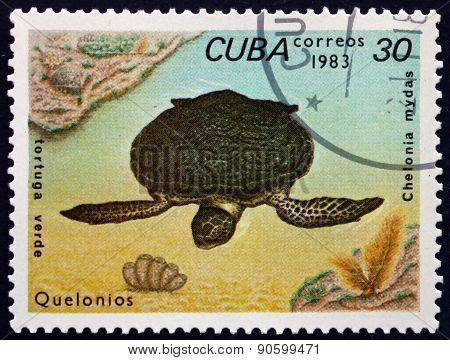 Postage Stamp Cuba 1983 Green Sea Turtle
