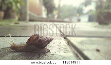 Snail Slow Animal Crawl Invertebrate Motion Nature Concept