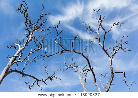 Dead Trees And Blue Sky