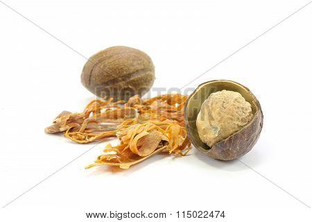Nutmeg  Seed  Mace Blade Spice