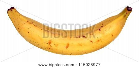 a plantain banana isolated on white background poster