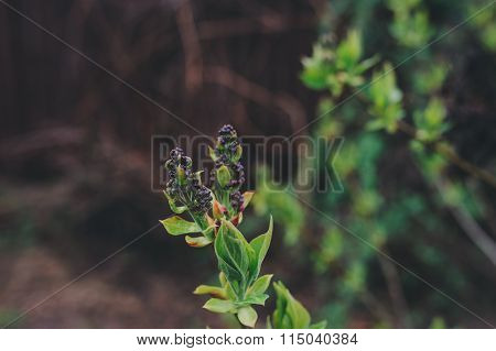 first spring green sprouts on tree branches close up. Environtment and nature care concept. Seasons