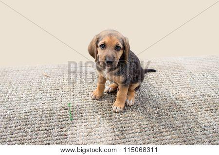 Cute Puppy Dog