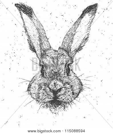 Vintage graphic Rabbit Vector Print