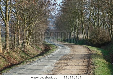Dirt road and trees without leaves