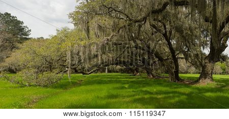 Charleston Oaks