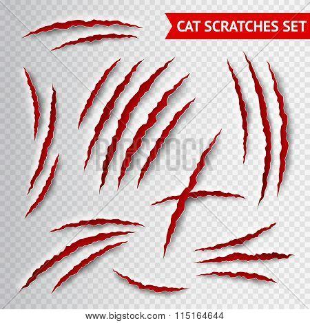 Cat scratches transparent