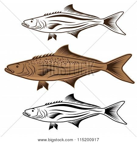 Cod Fish Vector Design Template
