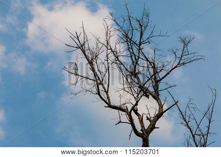 Closeup Of The Dry Tree With The Blue Sky