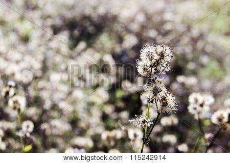 Spoil Flower Of Grass