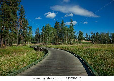 Golf Cart Path Through Course