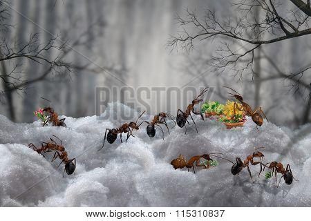 Like ants spring meet