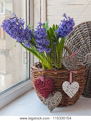 Hyacinths In A Basket In The Window
