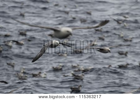 Seagulls Are Feasting