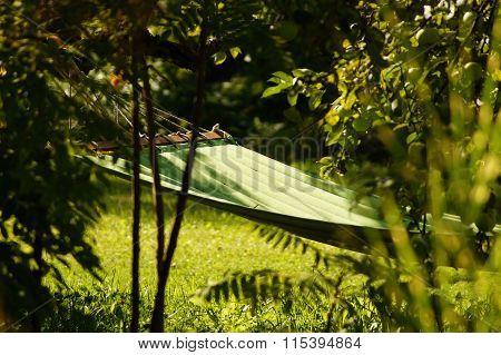 Hammock on tree